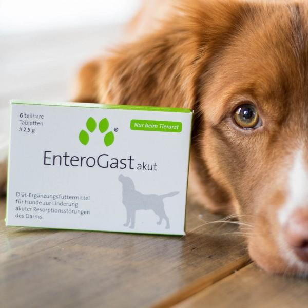 inuvet EnteroGast akut 6 teilbare Tabletten